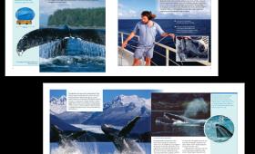 Whales interior spread